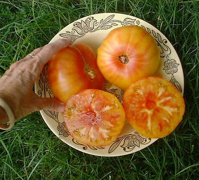 Organic Vegetable Tomato Beefsteak Pineapple 800 Finest Seeds Bulk