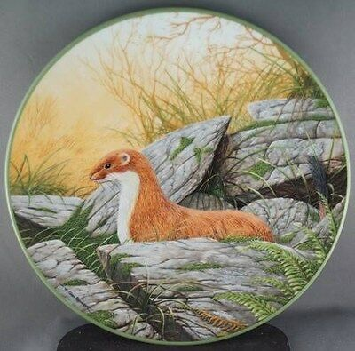 W G Rollinson A Stoat on Alert  Collector Plate Royal Doulton