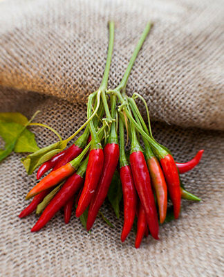 Vegetable  Hot Chilli Pepper Thai Dragon  10 Seeds