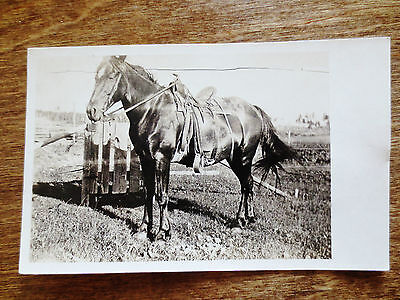 Early 1900s Ranch Saddled Horse View Real Photo Postcard Unposted Unused