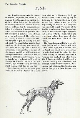 "The Saluki - Vintage Dog Art Print - Matted ""G"""