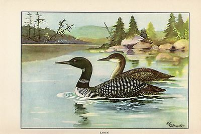 """1926 Vintage TODHUNTER BIRDS """"LOON"""" GORGEOUS 90 YEARS OLD Color Art Lithograph"""