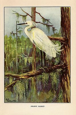 """1926 Vintage TODHUNTER BIRDS /""""YELLOW-BILLED CUCKOO/"""" WOW 90 YEARS OLD Lithograph"""