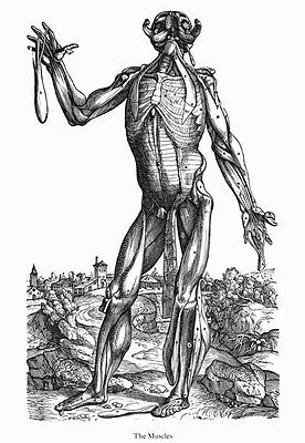 ML43 Vintage Medical Anatomy Human Body Muscles Nerve Da Cortona Poster A2//A3//A4