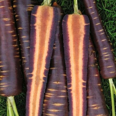 Afghan Purple Carrot Superfood Amazing Colour High Yielding 100 Fresh Seeds