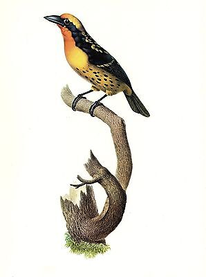 """/'Token/' Trout/"""" by Kathy Monica Young 1977 Lithograph"""