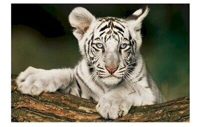 SIBERIAN TIGER CUB ON TREE ~ 24x36 CUTE BABY ANIMAL POSTER ~ NEW/ROLLED! 0345