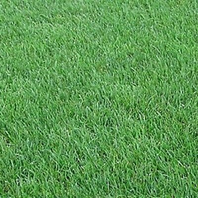 NEW ORLEANS SUPER LAWN GRASS NEW TO THE MARKET AMAZING CREEPING VELVET LAWN 5 Kg