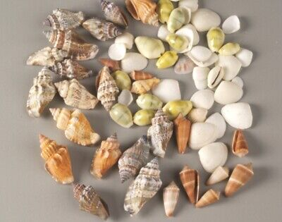 100g Assortment of Small & Medium Shells