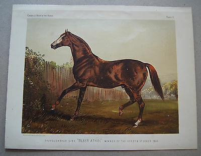 Lithographie Pferd Blair Athol Winner of the Berby & St.Leger 1864  (A2)