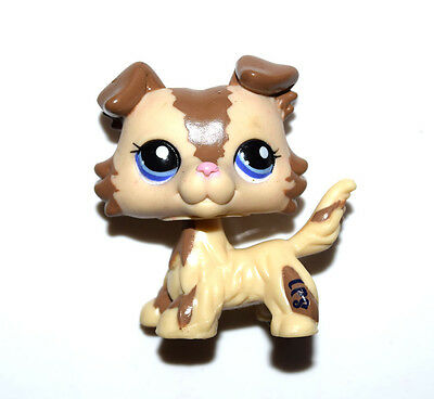 Littlest Pet Shop Animal Blue Eyes Cream Brown Collie Dog Figure Child Toy UK