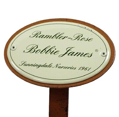 G1888: Rosenschild Emaille Rambler Rose Bobbie James, Sunningdale Nurseries 1961