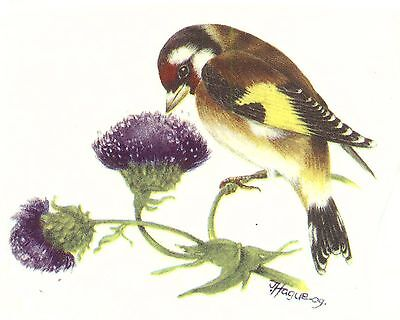 Goldfinch Finch Bird Purple Thistle Select-A-Size Waterslide Ceramic Decals Bx
