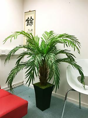 1.4M Artificial Phoenix Palm Tree in Tubus Gloss Black Pot Large Office Plant