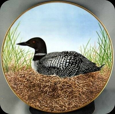 Eric Tenney Great Northern Diver Collector Plate