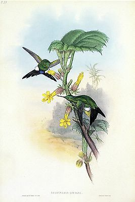 "1990 Vintage HUMMINGBIRD #215 /""GREEN THROATED FAIRY/"" LOVELY GOULD Art Lithograph"