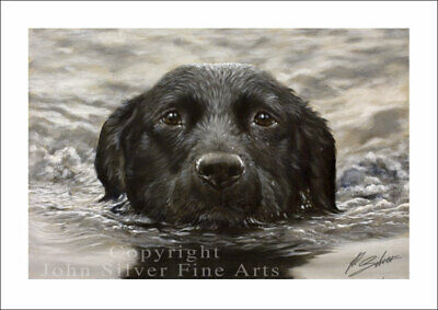 BLACK LABRADOR DOG PORTRAIT by JOHN SILVER. SIGNED A4 or A3 SIZE PRINT BL003SP