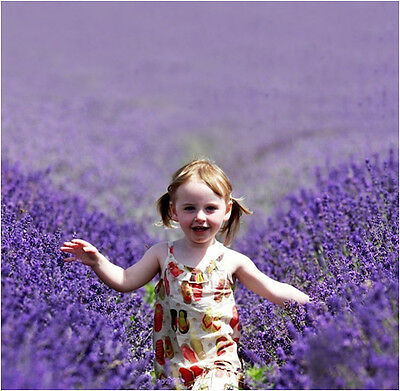 400 Purple Lavender Seeds Lavandula Angustifolia Flower Bulk Seeds S033