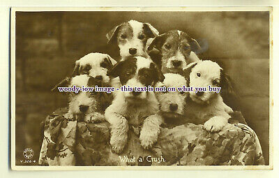 "an0130 - Seven Beautiful Puppies, on a Stand ""What a Crush"" c1937 - postcard"