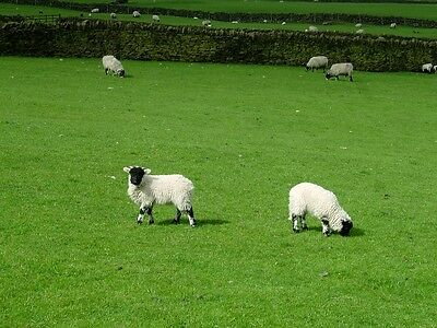 Permanent Pasture Grass Seed Grazing Mix Sheep Cows Cattle 1-20 Acre Farm Packs