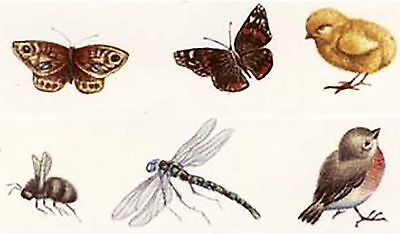 6 Butterfly Dragonfly Bee Robin Chick Bits 5199 Waterslide Ceramic Decals Bx