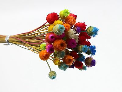 Mini Natural Dry Happy Flower Small Dyed for Miniature Craft DIY 50Pcs A Bunch