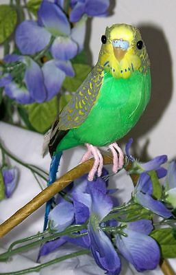 GREEN PARAKEET Bird For Sale BUDGIE REPLICA Prop FAKE taxidermy Tropical