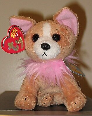 Ty Beanie Baby BB 2.0 ~ PICO the Chihuahua Dog ~ MINT with MINT TAGS
