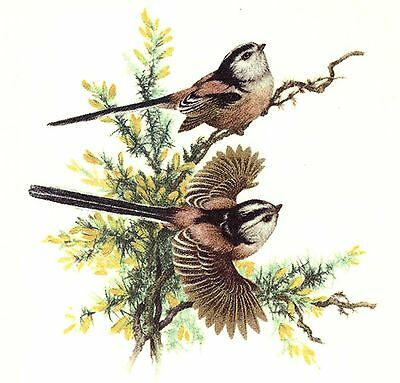 "3 Chaffinch Bird Pair 2-3/8"" X 2-1/2"" Waterslide Ceramic Decals Bx"
