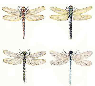 "Dragonfly Dragonflies 4 pcs  3"" Waterslide Ceramic Decals Cx"