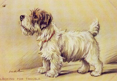 "Sealyham ""Bug"" - MATTED Dog Print - Lucy Dawson NEW"