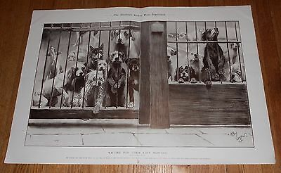 1905 Antique Print of Dogs by Cecil Aldin