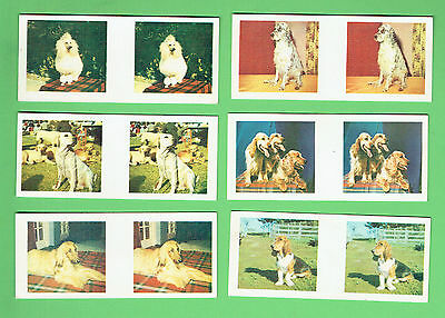 #d262.  Six 1963  Sanitarium True-To-Life Stereo Famous Dog Breeds  Cards