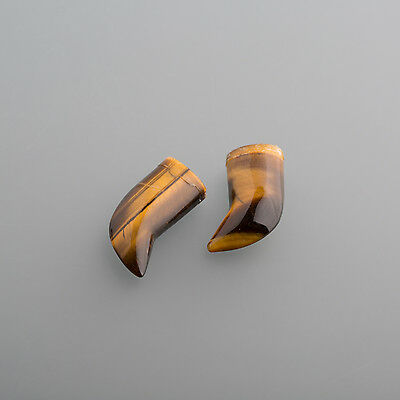 A real Tiger eye Claw shaped ca. 19mm / Box