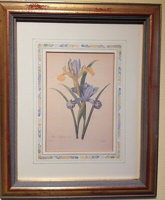 Rare Limited Ed' Print Natural History Museum Fairest Flowers Redoute - Iris
