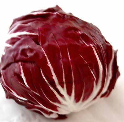 2g (approx.1300) radicchio seeds PALLA ROSSA popular Italian vegetable, unique