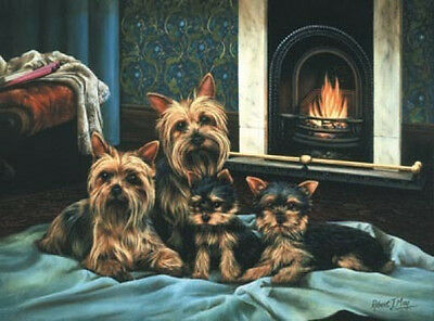 Robert J. May Open Edition Print - Yorkshire Terrier 4
