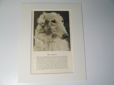 """Mounted 1931 BORZOI dog print 8"""" x 10"""" IDEAL GIFT Collectable"""