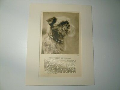 """Mounted 1931 GRIFFON BRUXELLOIS print 8"""" x 10""""  IDEAL GIFT Brussels Collectable"""