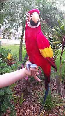 Complete Handcrafted Ultra Lightweight Parrot With Real Feathers/bendable Feet!
