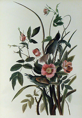 ANTIQUE 1937 AUDUBON PRINT - No.93 SEASIDE SPARROW - FREE SHIPPING !!