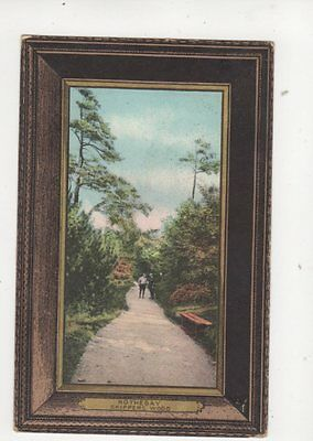 Rothesay Skippers Wood 1906 Postcard 149b