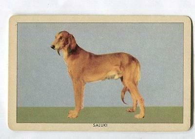 1950's Orange Crush Dog Picture trading card - Saluki