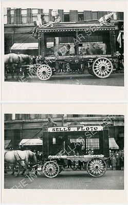 2 Vintage SELLS FLOTO CIRCUS Photos! TIGERS & POLAR BEARS in Cage Wagons!