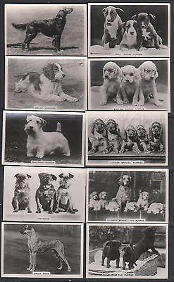 CIGARETTE CARDS Pattreiouex 1939 Dogs