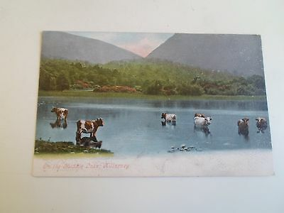 Old Postcard ON THE MIDDLE LAKE, KILLARNEY - Colour Tinted Unposted