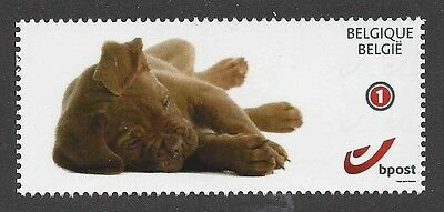 Dog Photo Body Portrait Postage Stamp DOGUE DE BORDEAUX Puppy Belgium 2015 MNH