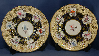 Pair of Victorian Hand Painted Floral Study Plates
