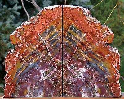 SiS: MASSIVE & BRILLIANT 20+ lb. ARIZONA RAINBOW Petrified Wood Bookend Set!!