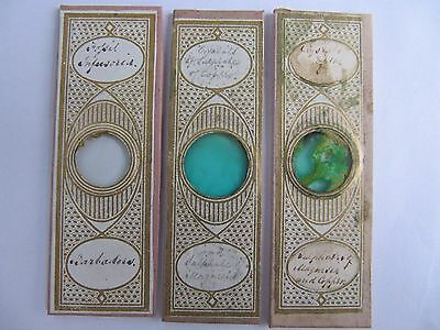 Three Very Interesting Antique Microscope Specimen Slides .. See Labels